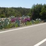 Marokkó túra onroad 35 Elválasztó sáv Őfelsége autópályáján