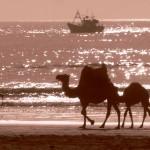 Marokkó túra onroad 128 Hajók ellenfényben