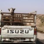 Marokkó túra onroad 96 Figyelő szemek…