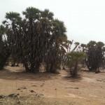 bamako nászút onroad 6_22
